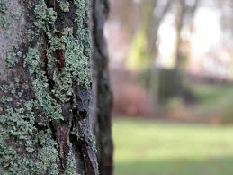 focus_tree_bark