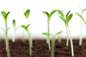 growing_seeds