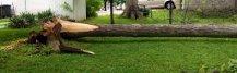 fallen.tree